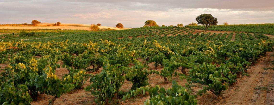 Spanish Wines : Ribera del Duero